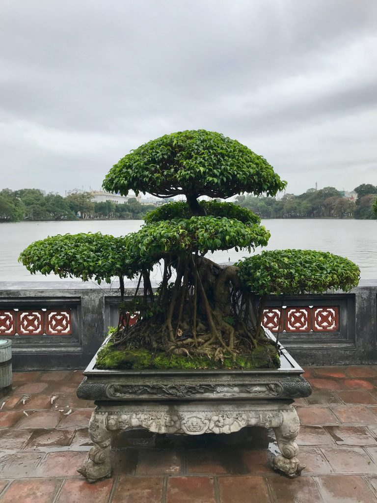 Bonsai trees in temple grounds