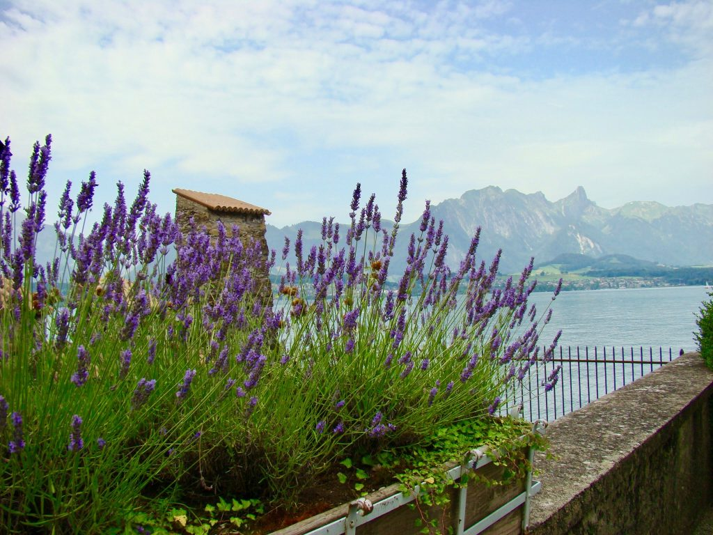 Lavender in the castle garden