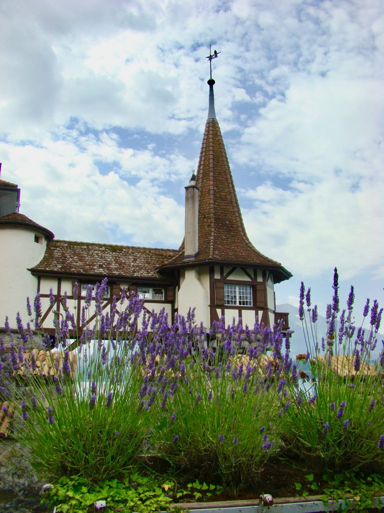 Lavender in the garden of Castle Oberhofen lake Thun