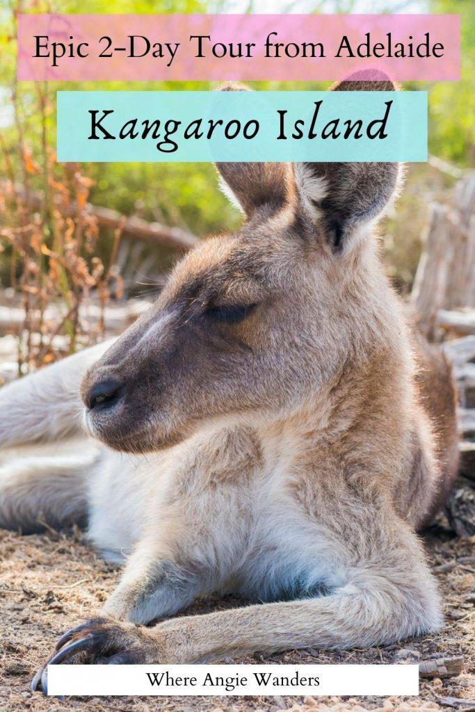Kangaroo lying on floor