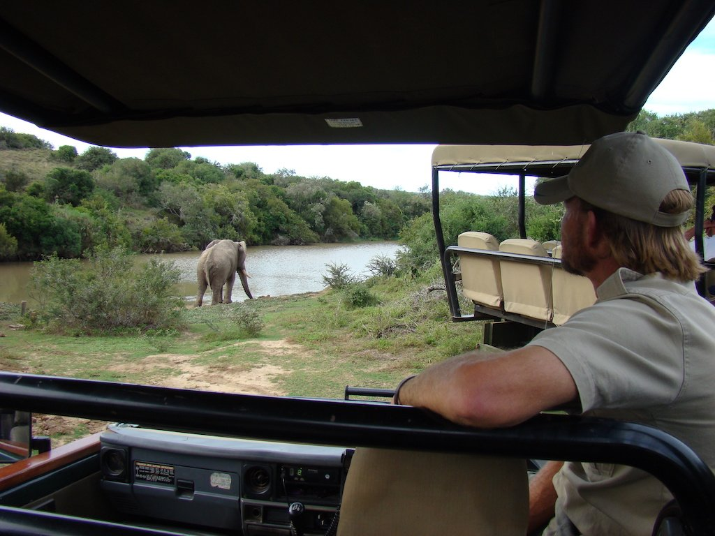 Viewing an elephant on a game drive