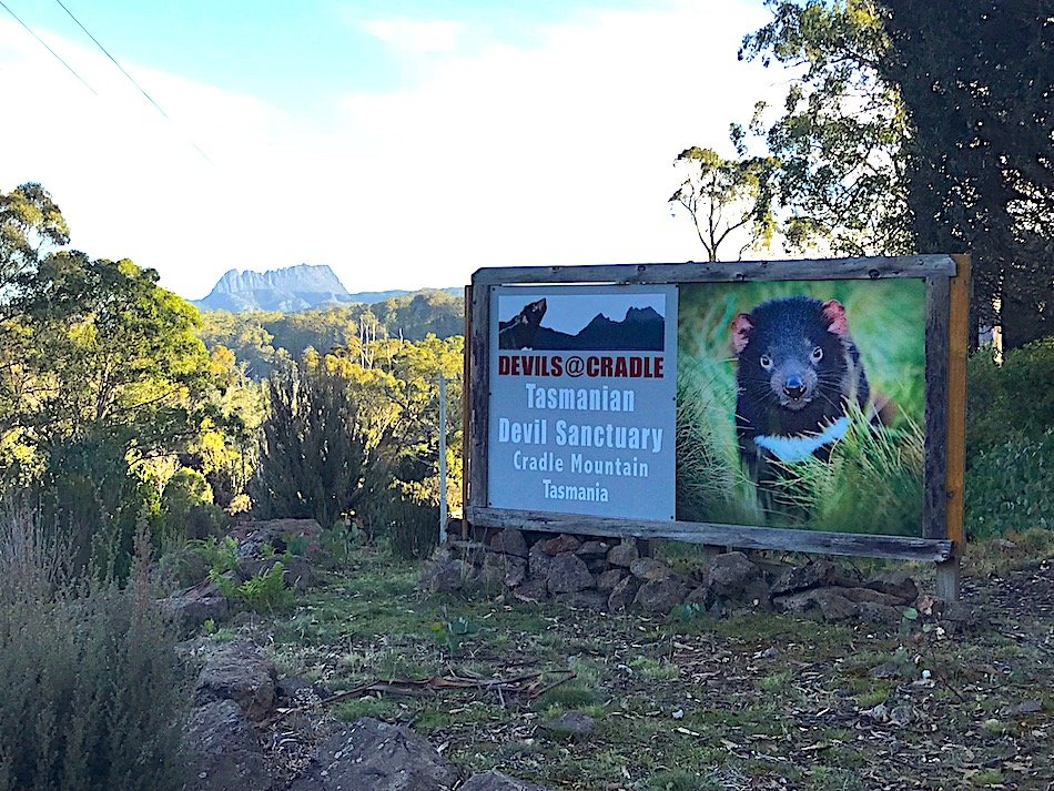 how-and-where-to-see-a-tasmanian-devil