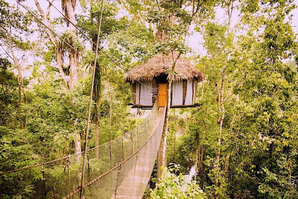 A treehouse in a jungle