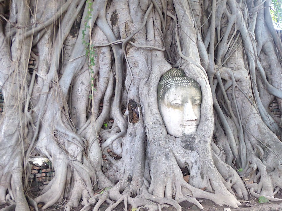 buddha head reclaimed by tree roots in Thailand
