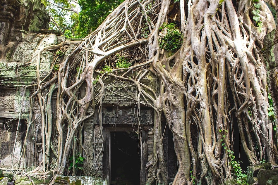 A temple with tree roots growing over it
