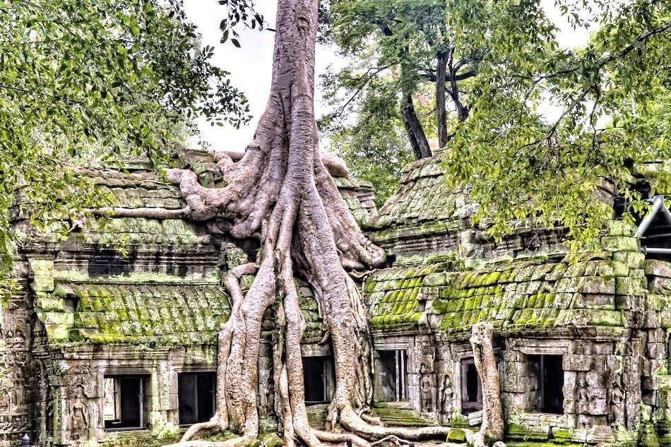 Roots over a temple in Cambodia