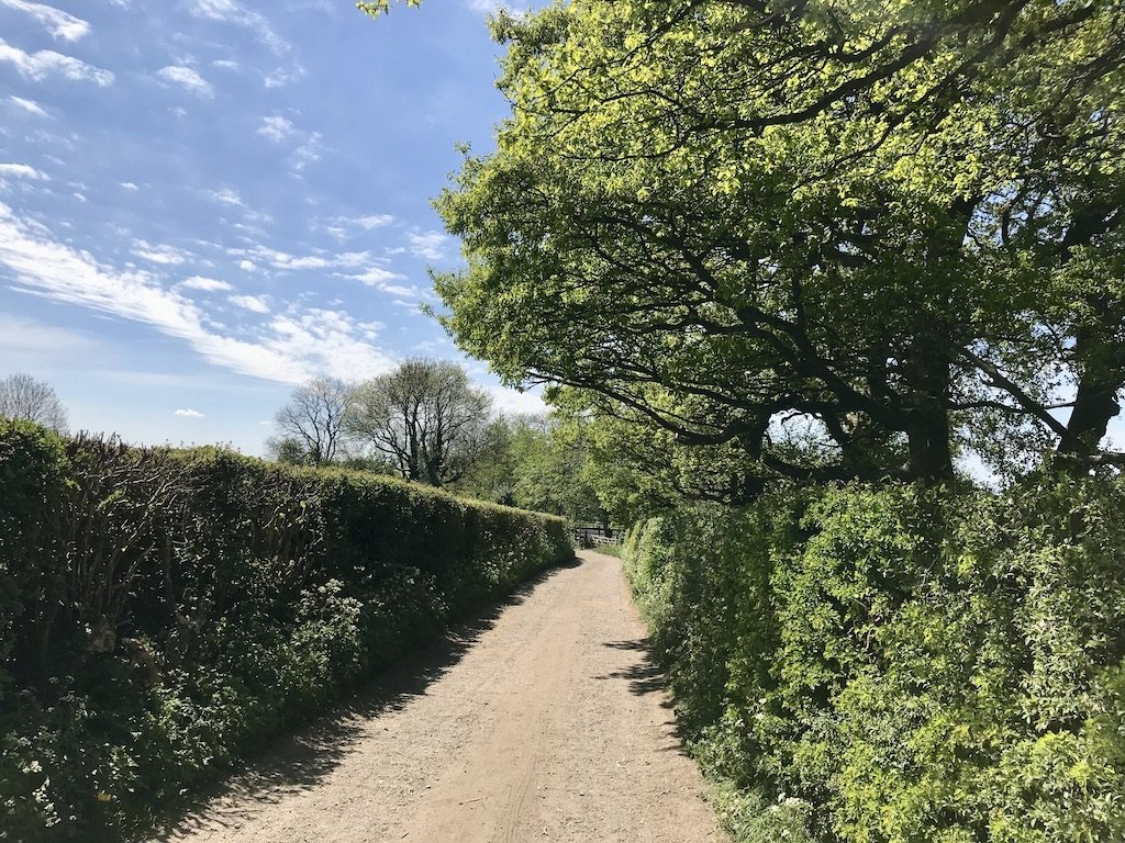 a lane flanked by hedgerow