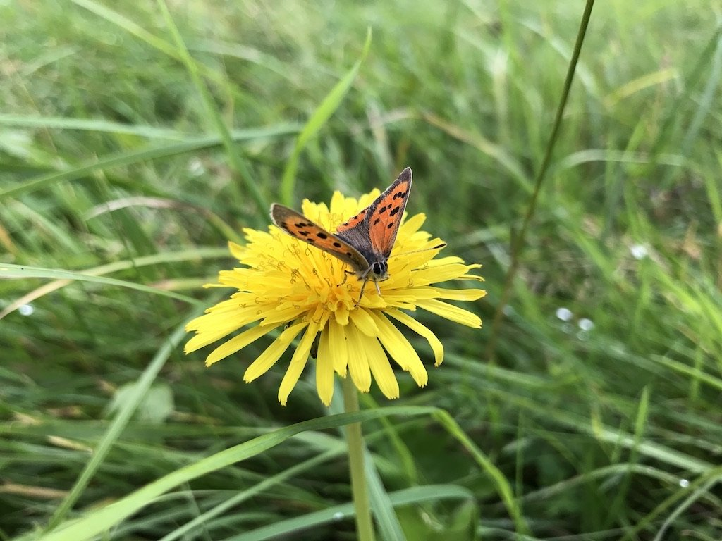 a red butterfly on a yellow flower