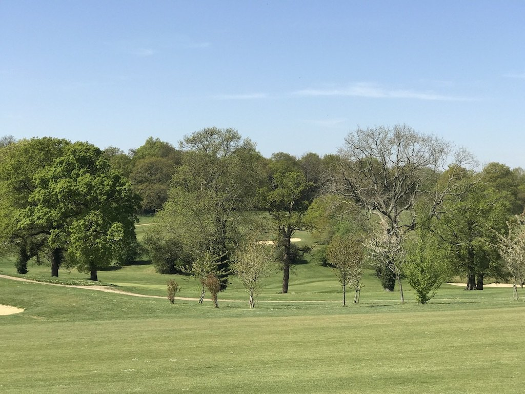 A copse of trees on the golf course