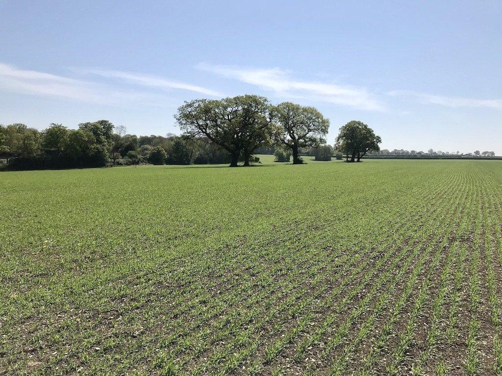Fields surrounding Chaldon Church