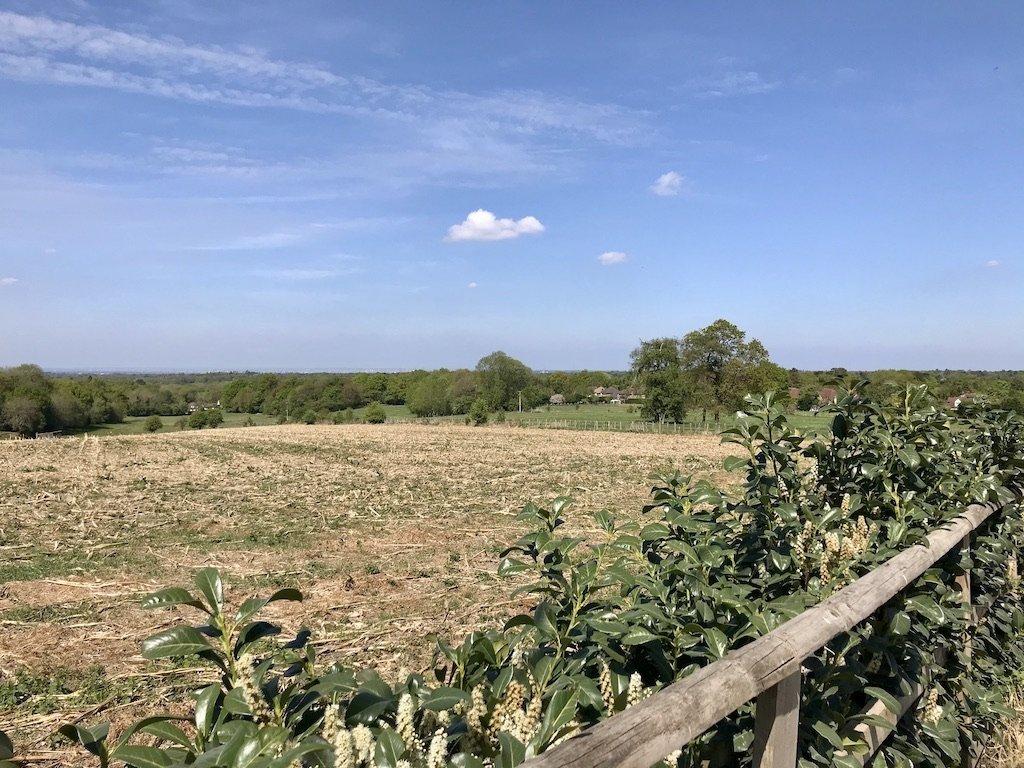 Barren Maize Fields