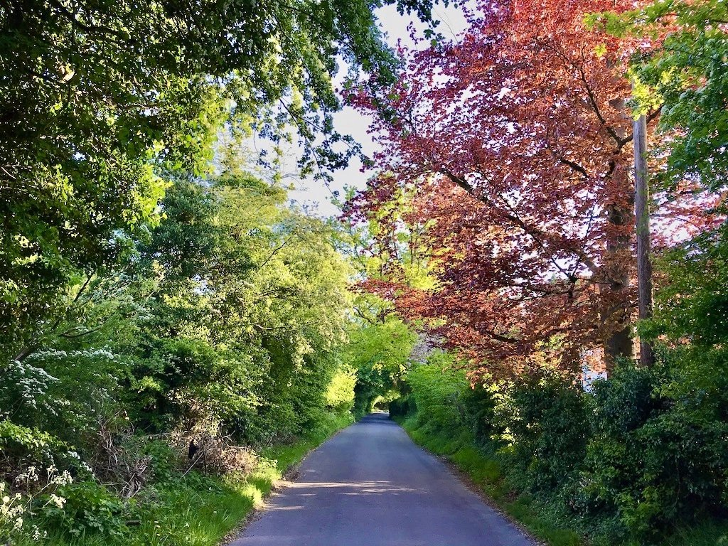 a road lined with red and green trees