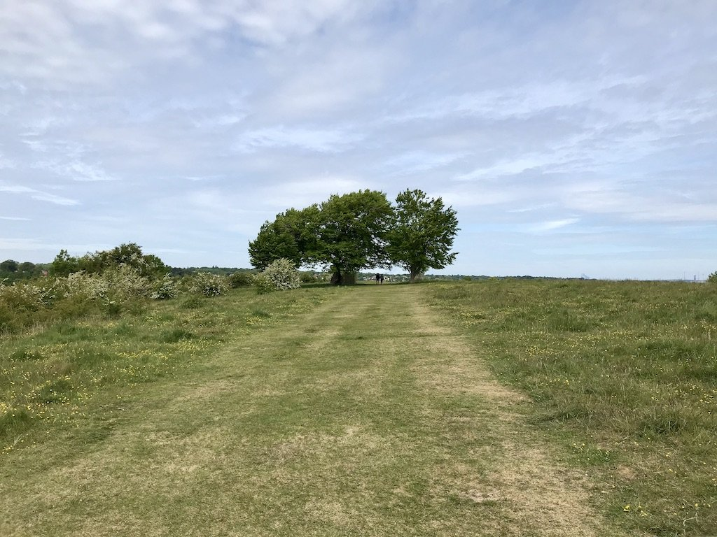 Two Trees on top of a grass hill