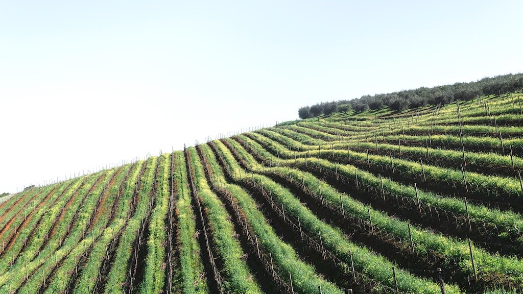 view of vineyards in the Cape Winelands