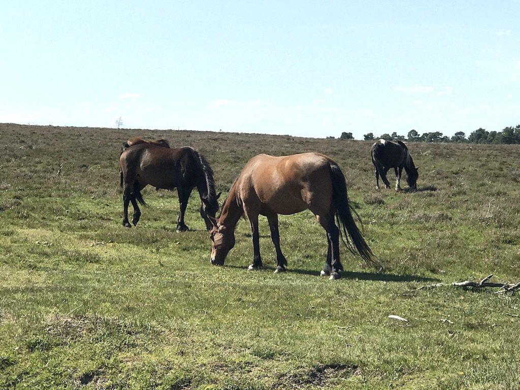 Three Ponies Grazing on Grass