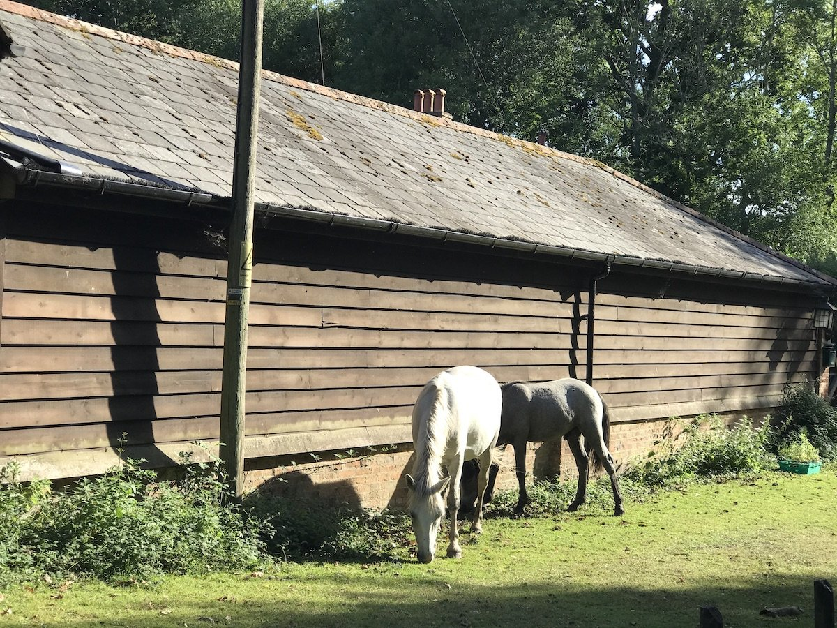 A black and white horse outside a wooden barn in the New Forest