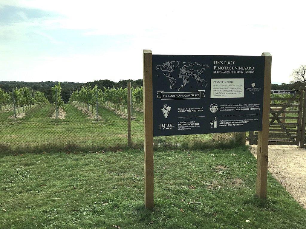 vineyard at Leonardslee