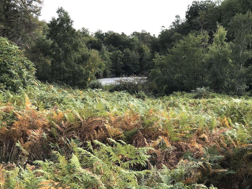 Ferns in the gardens