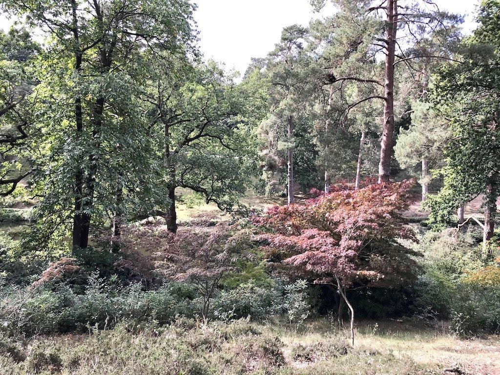 Oaks and Acer Garden Walk