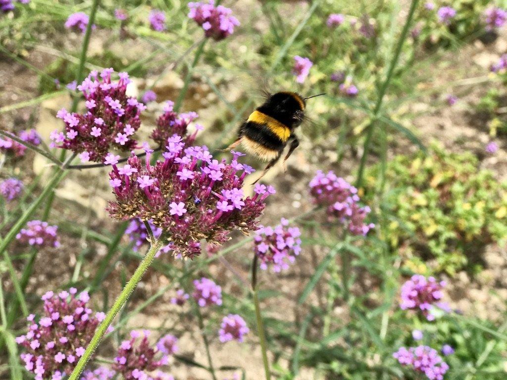Bee flying off flower