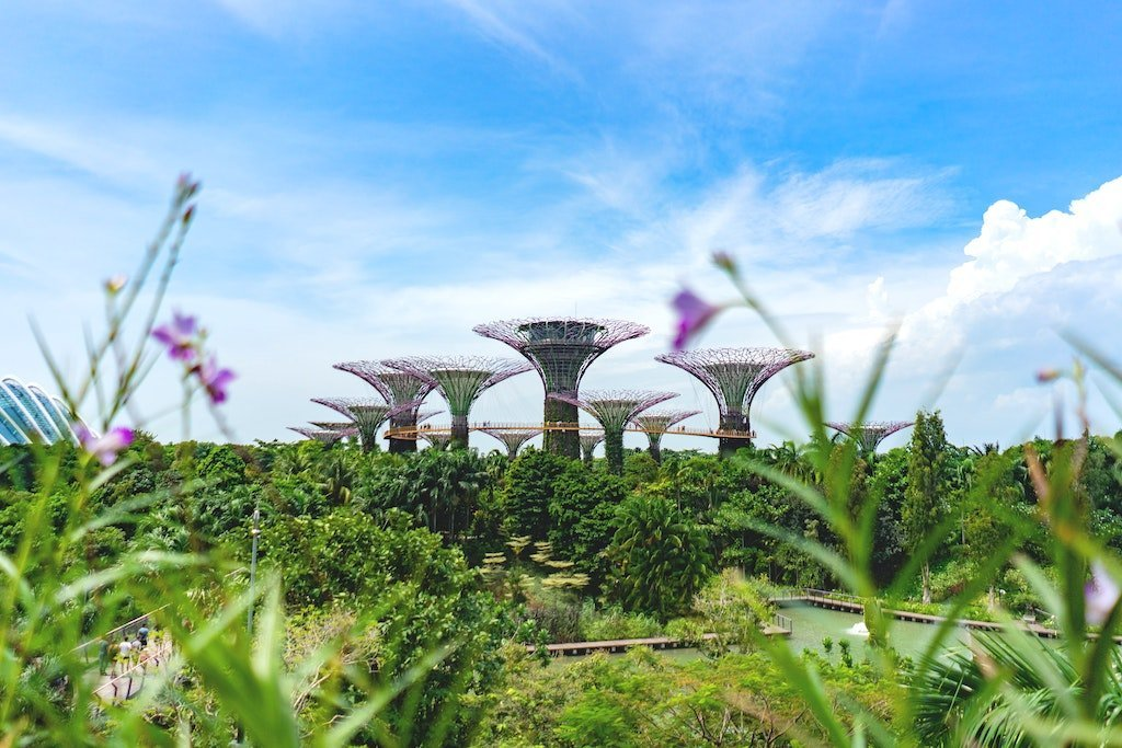 Supertree Grove Gardens in Singapore