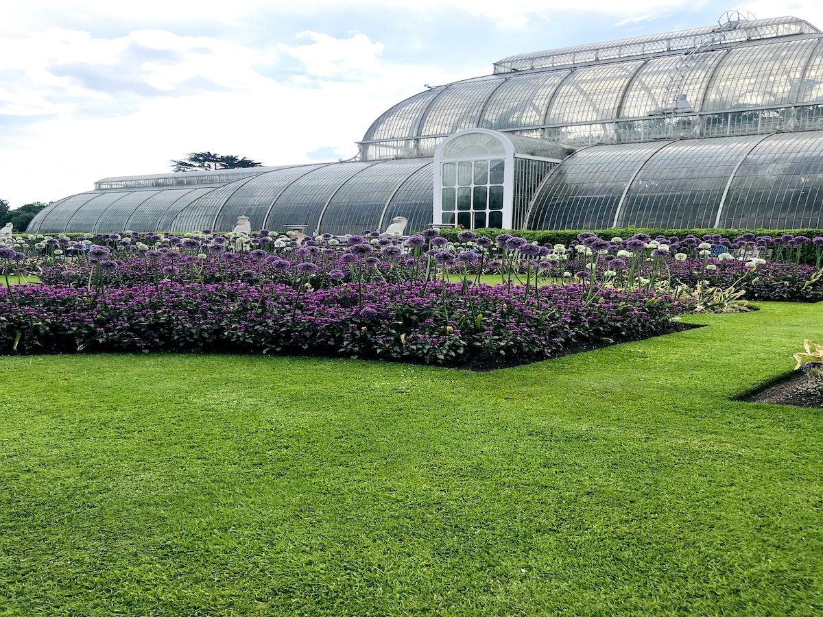 Palm Glass house and purple flowers