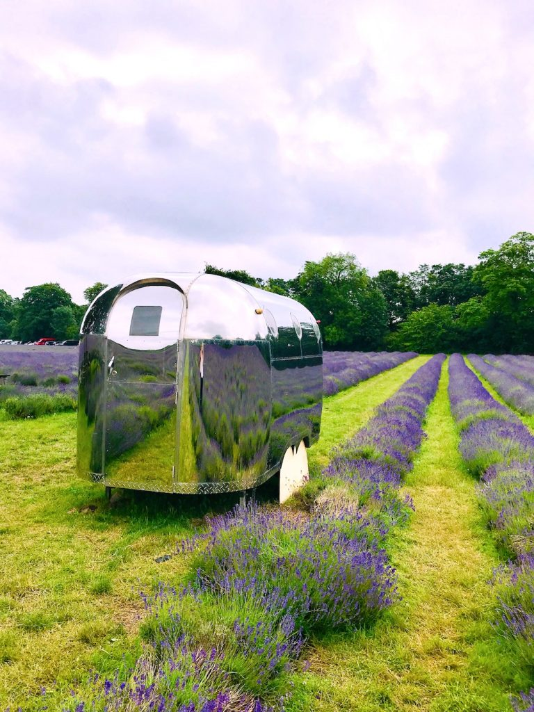the silver airstream trailer in the lavender fields