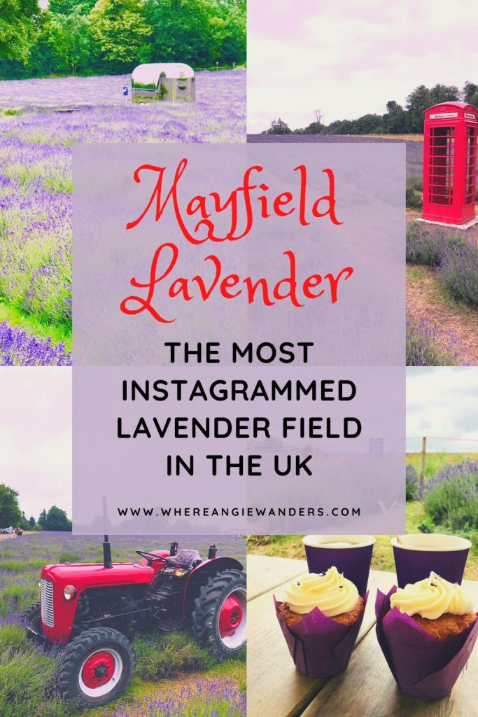 Pinterest Graphic for Lavender Farms