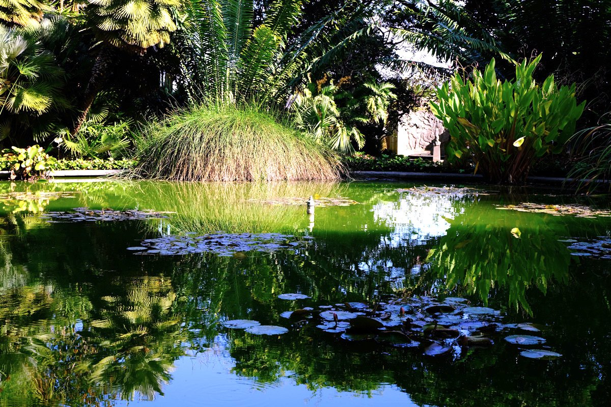 Lake in the botanic garden with large fern growing in it