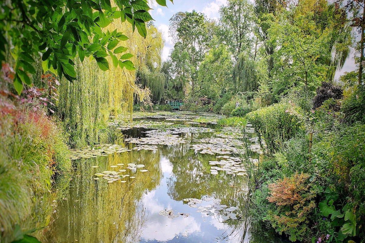 Lake, trees, lily pads