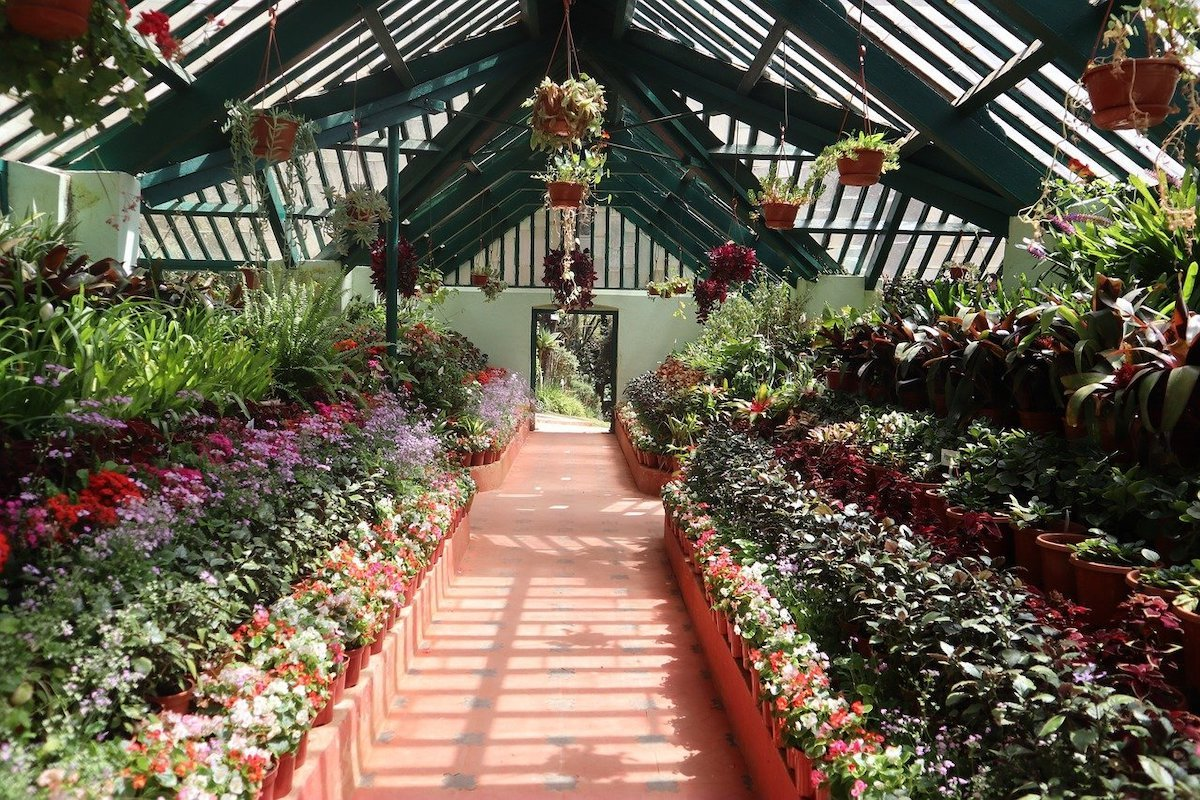 Ooty glasshouse with plants