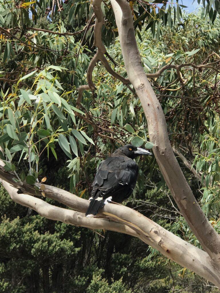 A black bird sits in a tree