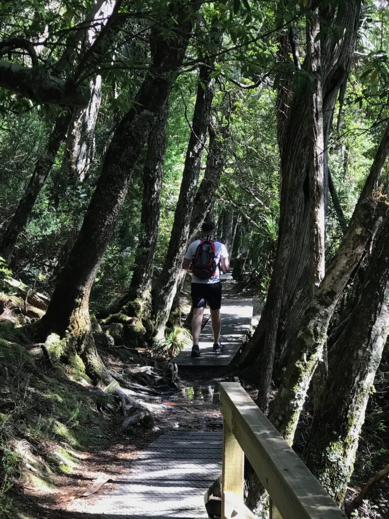 Dominic walks through a densely planted area of Dove Lake known as the ballroom forest