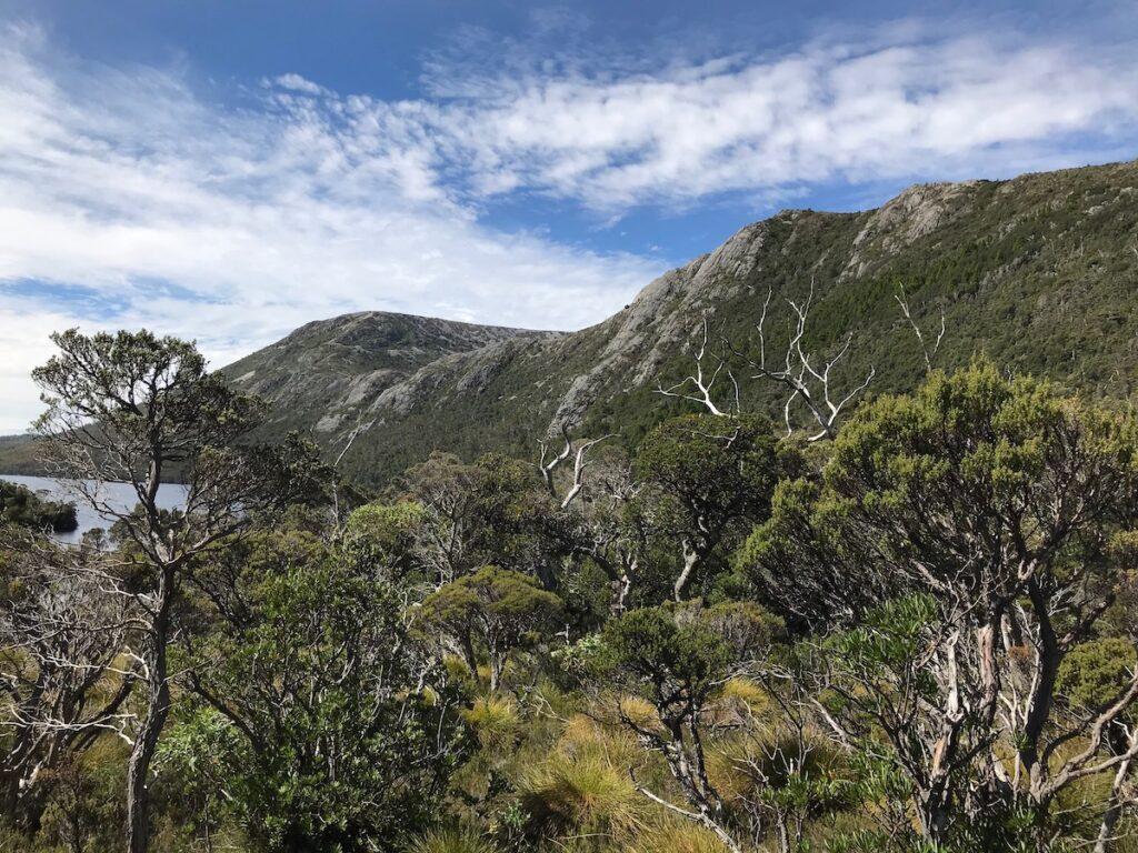 View of the dense rainforest around Dove lake
