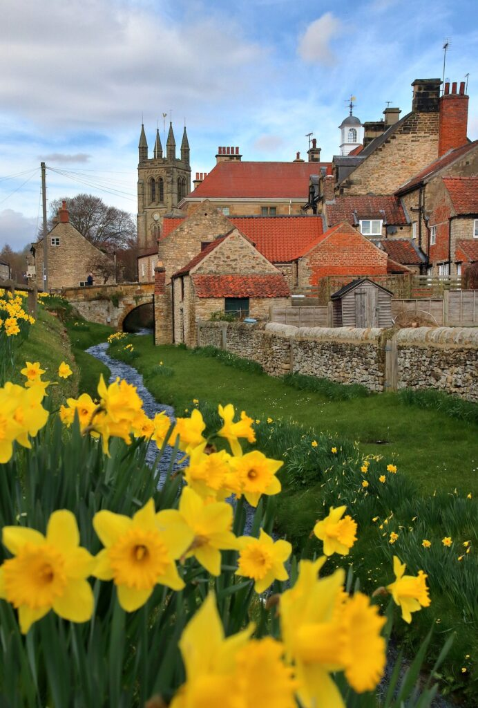 red-roofed houses in Helmsley, North Yorkshire with a stream running in front of them and lots of yellow daffodils on the banks of the stream. In the background is Helmsley church.