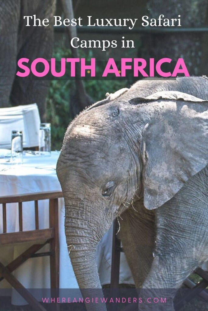 Pinterest Graphic of baby elephant