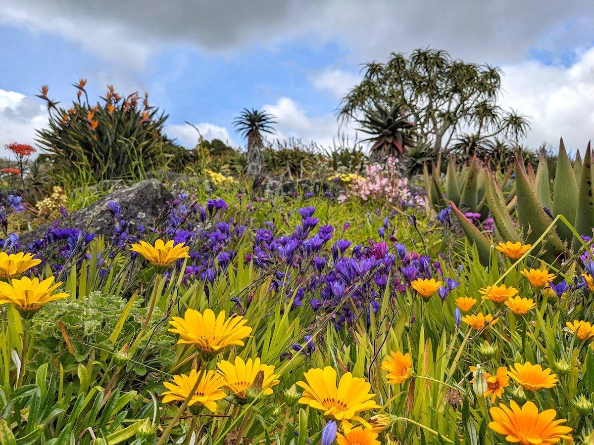 Auckland-Botanical-Garden