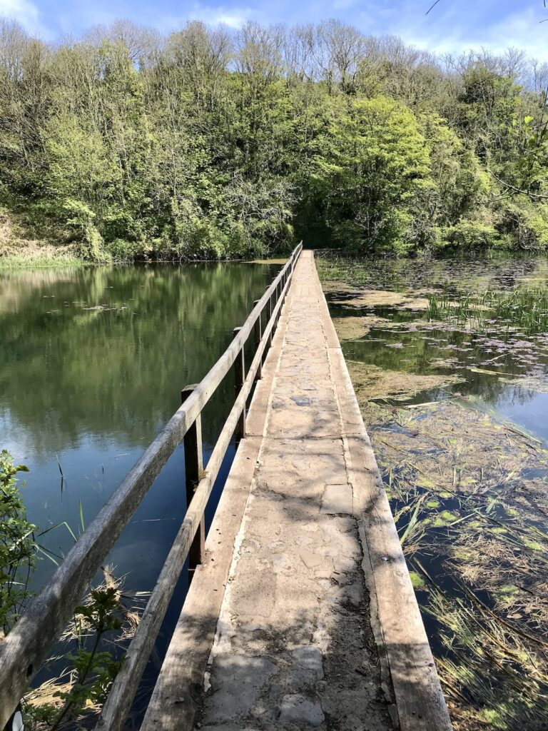 A long wooden bridge across the lily pond