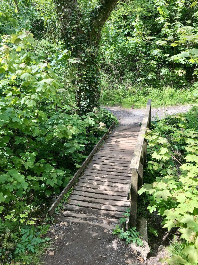 a boardwalk in Bosherston Ponds