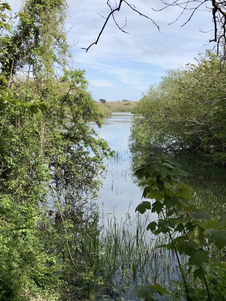 A pond view