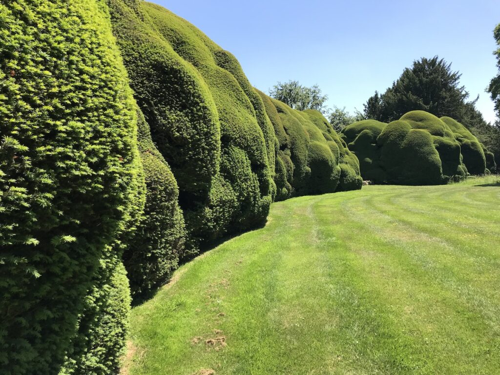 clipped yew hedges at Doddington Place Gardens in Kent