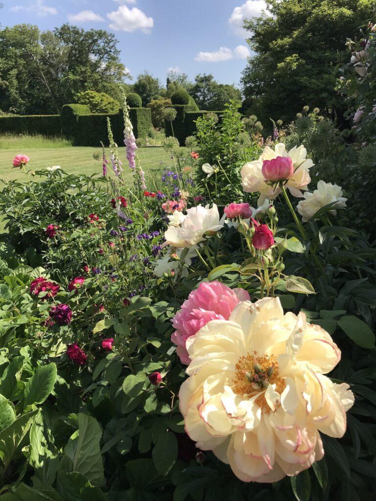 rose borders at Doddington Place Gardens in Faversham Kent