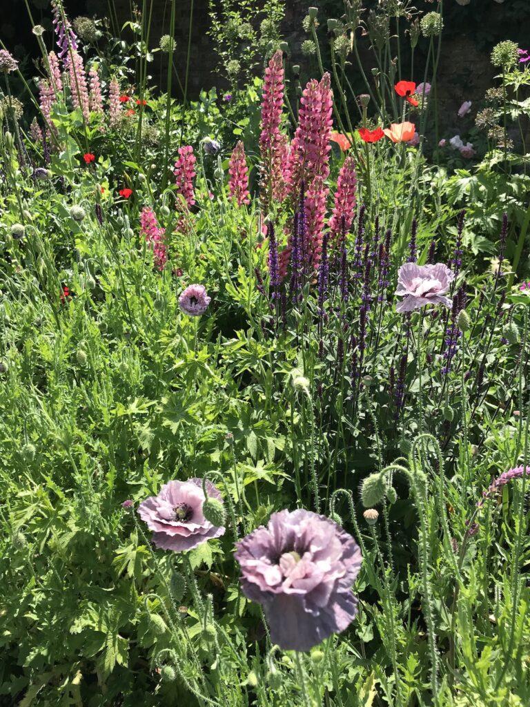 Mixed borders at Doddington Place Gardens in Faversham