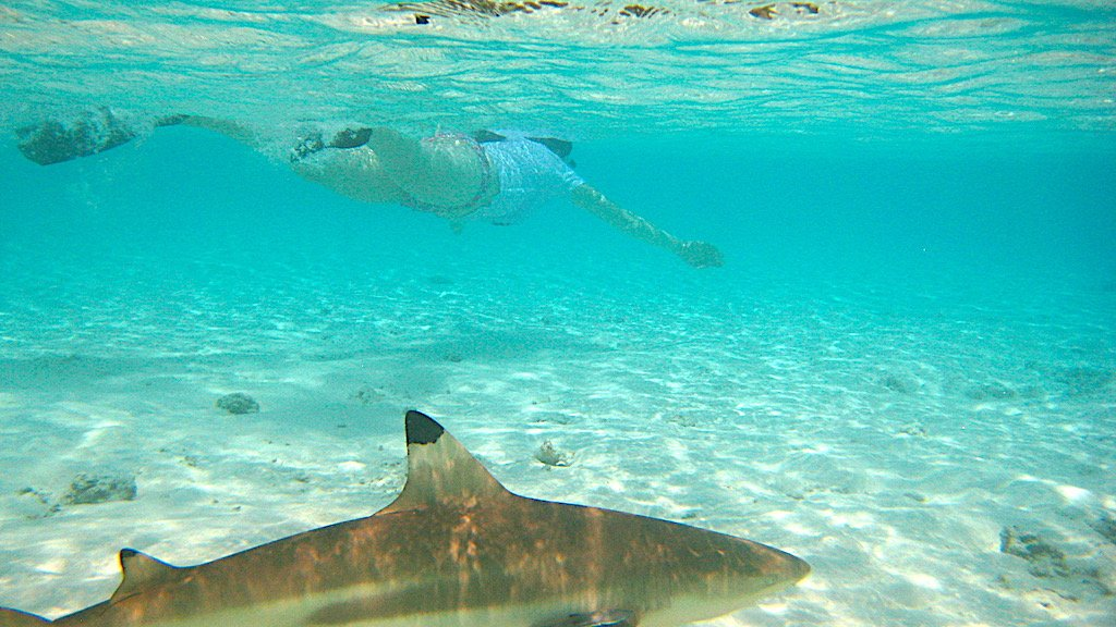 Lady swimming above a shark