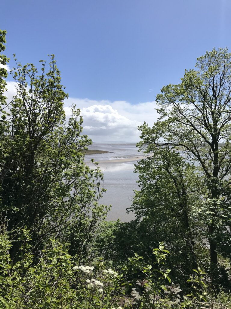 Views between the trees on the Taf Estuary