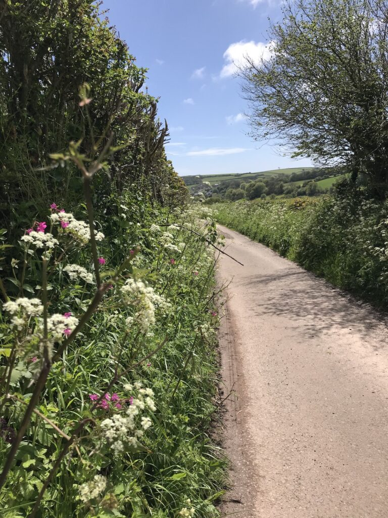 A country road lined with kerbside wildflowers