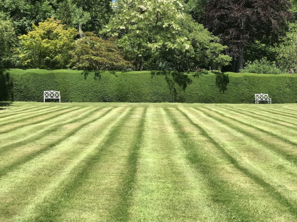 Striped lines in garden lawn leading to two white chairs against a hedge