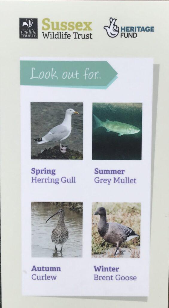 Information sign showing birdlife in Rye Harbour Nature Reserve