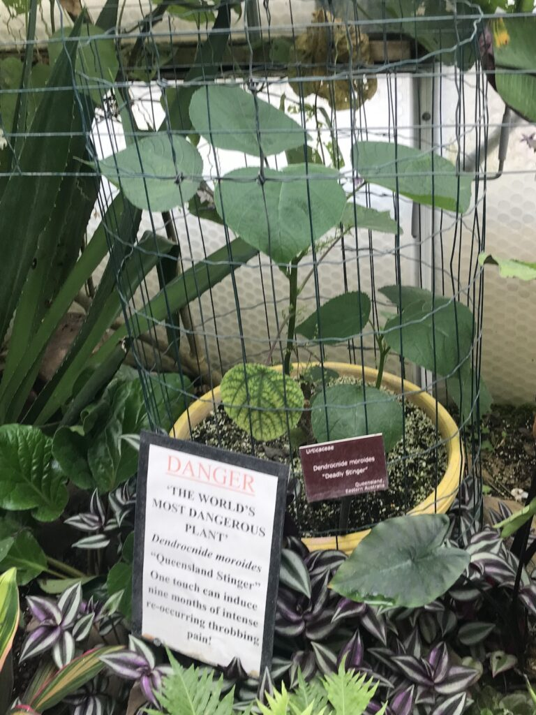 stinger plant