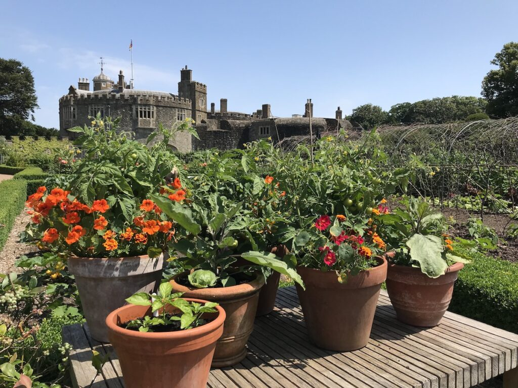 Plants and veg growing in pots in Walmer Castle Kitchen Garden